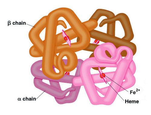 Bolest hemoglobina C